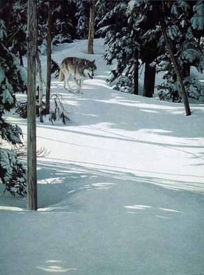 Forest Trek – Gray Wolf- Signed By The Artist – PaperLithograph – Limited Edition – 950S/N – 26 1/4x19 3/4 –