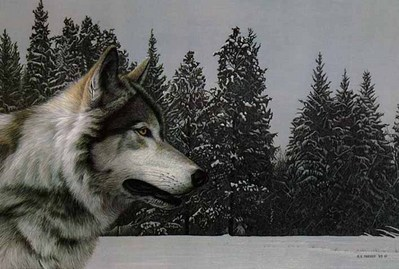 Gray Wolf Portrait- Signed By The Artist – PaperLithograph – Limited Edition – 950S/N – 13 1/2x20