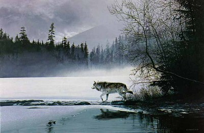 Spring Mist – Gray Wolf- Signed By The Artist – PaperLithograph – Limited Edition – 950S/N – 19x27 1/2