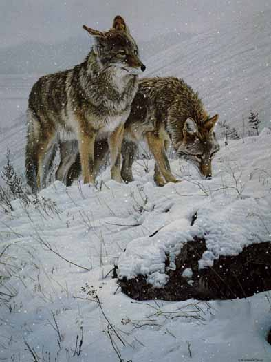 Winter Storm – Coyotes- Signed By The Artist – PaperLithograph – Limited Edition – 950S/N – 27 1/2x20 1/2