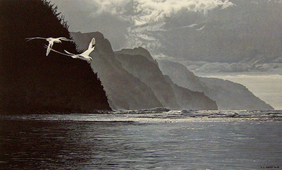 White-Tailed Tropicbirds- Signed By The Artist – PaperLithograph – Limited Edition – 950S/N – 16 1/4x27 1/4
