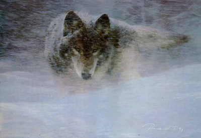 Storm Runner – Timber Wolf- Signed By The Artist – PaperLithograph  – Limited Edition  – 950S/N  –  19 1/2x28  –