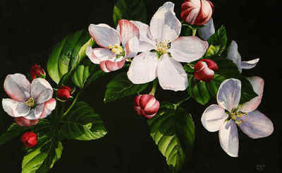 Apple Blossom Time- Signed By The Artist – PaperLithograph  – Limited Edition  – 550S/N  –  9 1/2x15 1/4