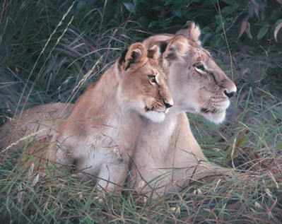 Mara Baby- Signed By The Artist – CanvasGiclee  – Limited Edition  – 180S/N  –  24x30