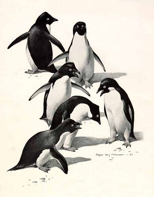 Adelie Penguins- Signed By The Artist								 – Paper Lithograph – Limited Edition – 20 P/P – 12 x 9 1/2 –