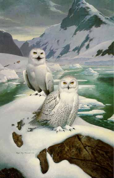 Arctic Glow – Snowy Owls- Signed By The Artist – PaperLithograph  – Limited Edition  – 56A/P  –  30x19 1/2