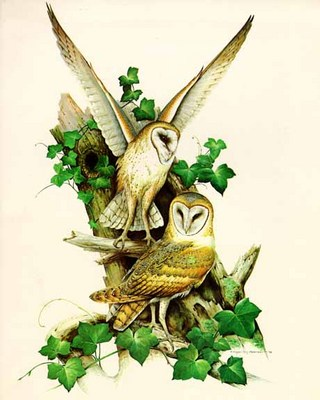 Barn Owl- Signed By The Artist – PaperLithograph  – Limited Edition  – 950S/N  –  35x22