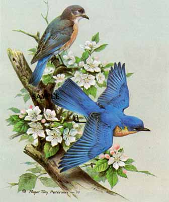 Bluebird- Signed By The Artist – PaperLithograph  – Limited Edition  – 20P/P  –  14x14