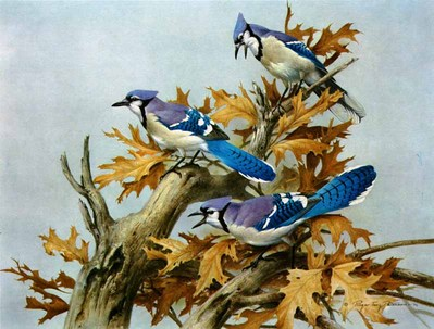 Blue Jay- Signed By The Artist – PaperLithograph – Limited Edition – 950S/N – 18x23 1/2