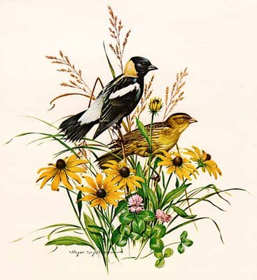 Bobolink- Signed By The Artist – PaperLithograph  – Limited Edition  – 20P/P  –  17x17