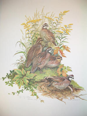 Bobwhite- Signed By The Artist – PaperLithograph – Limited Edition – 20P/P – 27x21