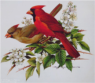 Cardinal- Signed By The Artist – PaperLithograph  – Limited Edition  – S/N  –  17x17