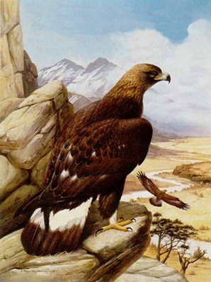 Golden Eagle- Signed By The Artist – PaperLithograph – Limited Edition – 950S/N – 27x20