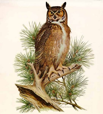 Great Horned Owl- Signed By The Artist								 – Paper Lithograph – Limited Edition – 750 S/N – 27 x 20