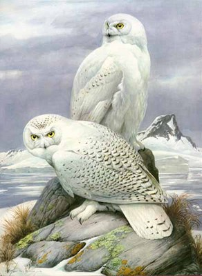 Snowy Owl- Signed By The Artist – PaperLithograph – Limited Edition – 950S/N – 26 1/2x18