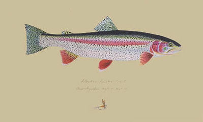 Alaskan Rainbow Trout- Signed By The Artist								 – Paper Lithograph – Limited Edition – 75 A/P – 9 1/2 x 15 1/2