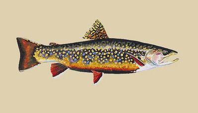Brook Trout- Signed By The Artist								 – Paper Lithograph – Limited Edition – 1000 S/N – 9 1/2 x 15 1/2