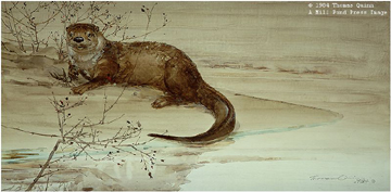 American River Otter With Wild Rose- Signed By The Artist – PaperLithograph  – Limited Edition  – 950S/N  –  13x27