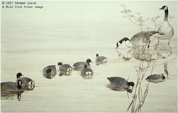 Sweet Fennel With Coots And Geese- Signed By The Artist – PaperLithograph  – Limited Edition  – 950S/N  –  17x24