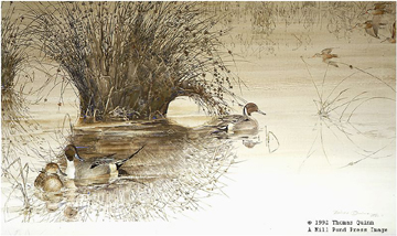 Untroubled Water- Signed By The Artist – PaperLithograph  – Limited Edition  – 950S/N  –  19 3/8x34 5/8