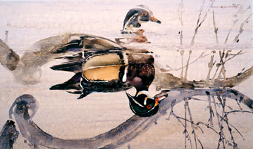 Willow Wood – Wood Duck- Signed By The Artist								 – Paper Lithograph – Limited Edition – 950 S/N – 11 5/8 x 19 3/4