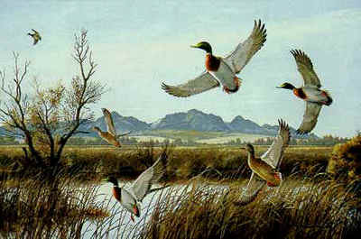Flaring – Mallards- Signed By The Artist								 – Paper Lithograph – Limited Edition – 950 S/N – 22 1/4 x 29 5/8