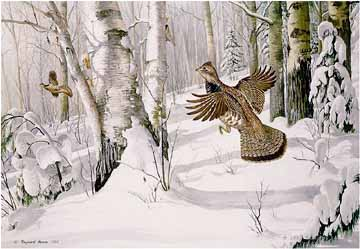 Heavy Snow – Ruffed Grouse- Signed By The Artist – PaperLithograph  – Limited Edition  – 950S/N  –  20x26