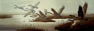Misty Flight – Canada Geese- Signed By The Artist – PaperLithograph  – Limited Edition  – 550S/N  –  10 5/8x32 3/8
