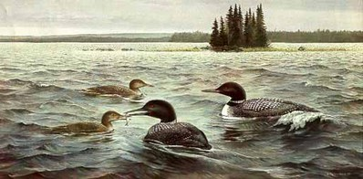 Offshore Lunch – Common Loons- Signed By The Artist – PaperLithograph  – Limited Edition  – 550S/N  –  15x30