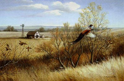 Weedy Draw – Ring-Necked Pheasants- Signed By The Artist – PaperLithograph  – Limited Edition  – 950S/N  –  18x27