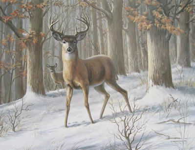Alert – Whitetail Deer- Signed By The Artist – PaperLithograph  – Limited Edition  – 550S/N  –  21 1/2x28  –