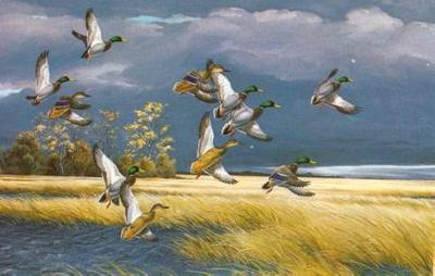 Dark Sky – Mallards- Signed By The Artist – PaperLithograph  – Limited Edition  – 950S/N  –  14x21