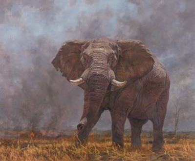 Bush Fire- Signed By The Artist – CanvasGiclee  – Limited Edition  – 180S/N  –  30x36