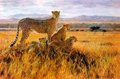 A Vantage Point- Signed By The Artist – PaperLithograph  – Limited Edition  – 950S/N  –  20x30