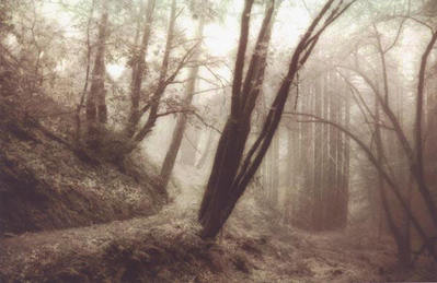Forest Path (Photograph)- Signed By The Artist								 – Paper Giclee – Limited Edition – 250 S/N – 7 x 11