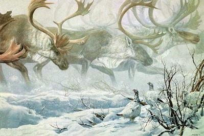 Arctic Procession – Willow Ptarmigan With Caribou- Signed By The Artist – CanvasGiclee – Limited Edition – 150S/N – 36x54