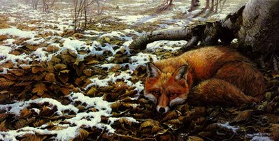 Early Snow – Red Fox- Signed By The Artist – PaperLithograph – Limited Edition – S/N – 0x0 –