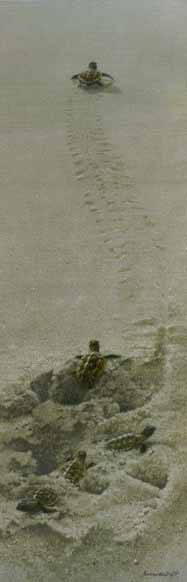 Finding The Way – Turtle Hatchlings- Signed By The Artist – PaperLithograph – Limited Edition – 76A/P – 26x8 5/8