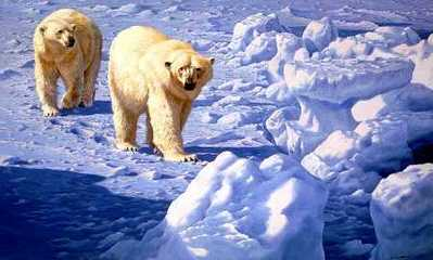 Along The Ice Floe – Polar Bears- Signed By The Artist – PaperLithograph – Limited Edition – 950S/N – 24x36