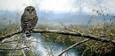 Autumn Mist – Barred Owl- Signed By The Artist								 – Paper Lithograph – Limited Edition – 950 S/N – 18 3/8 x 31 5/8 –