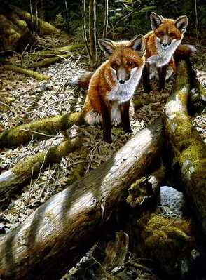 Children Of The Forest – Red Foxes- Signed By The Artist – PaperLithograph – Limited Edition – 950S/N – 24 3/8x18 5/8