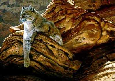 Cliff Hanger – Bobcat- Signed By The Artist – PaperLithograph – Limited Edition – 56A/P – 19x26