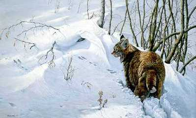 Close Encounter – Bobcat- Signed By The Artist – PaperLithograph – Limited Edition – 950S/N – 17 3/8x21 3/4 –