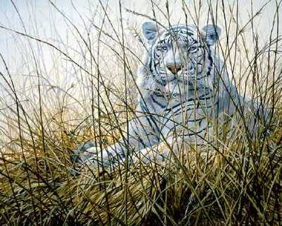 Dawn Majesty- Signed By The Artist – PaperLithograph – Limited Edition – 1250S/N – 18 1/2x23 1/8