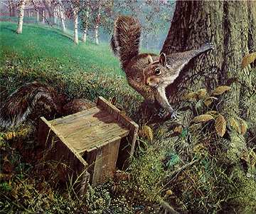 Early Windfall – Gray Squirrels- Signed By The Artist – PaperLithograph – Limited Edition – 56A/P – 17x20 3/8