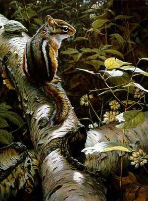 Fallen Birch – Chimpmunk- Signed By The Artist – PaperLithograph – Limited Edition – 950S/N – 15 3/8x11 3/8
