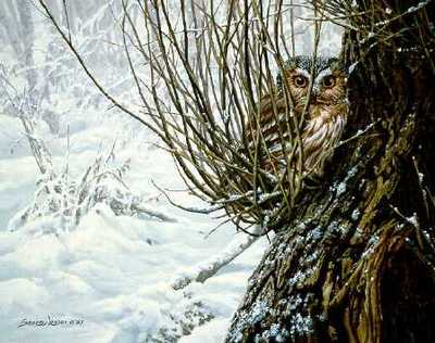 Hiding Place – Saw Whet Owl- Signed By The Artist								 – Paper Lithograph – Limited Edition – 56 A/P – 10 5/8 x 13 3/8