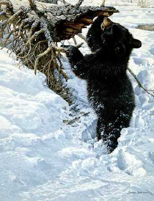 In Deep – Black Bear Cub- Signed By The Artist – PaperLithograph – Limited Edition – 56A/P – 19x15 1/8