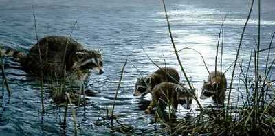 Moonlight Fishermen – Raccoons- Signed By The Artist – PaperLithograph – Limited Edition – 950S/N – 15 1/8x30 3/8