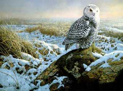 Morning Mist – Snowy Owl- Signed By The Artist – PaperLithograph – Limited Edition – 950S/N – 18 5/8x23 1/2